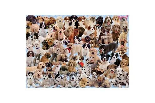 Puzzle 1000 pièces - galerie de chiens