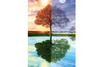 Puzzles Schmidt Puzzle 500 pièces : l'arbre des quatre saisons