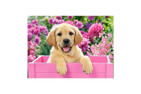 Puzzle 300 pièces : labrador dans une boîte rose