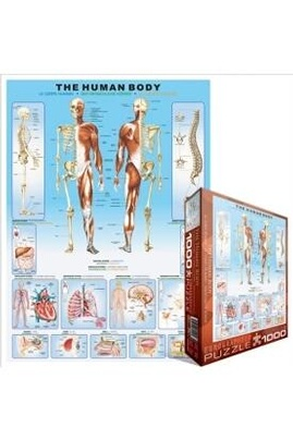 Eurographics puzzle 1000 pc - the human body