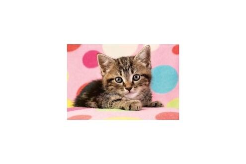 Schmidt spiele puzzle un adorable chaton - 100 pieces