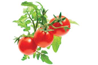 Autre accessoire de cuisine MINI TOMATO REFILLX3 Click And Grow