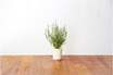 Click And Grow RECHARGE THYME photo 1